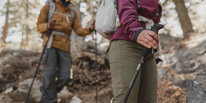 Trekking Pole in the forest